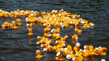 Rubber Duck Racing